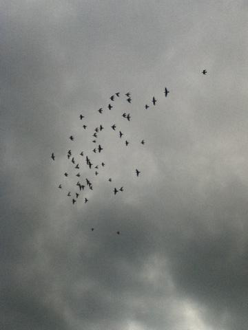 20110606-170715.jpg
